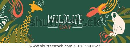 Przyrody dzień dżungli internetowych banner Zdjęcia stock © cienpies
