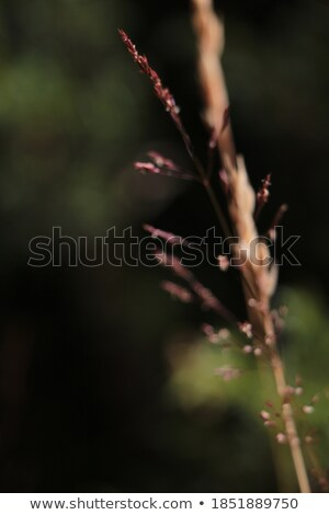 Blurred color area in pink Stock photo © Ustofre9