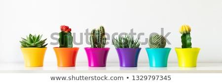 кактус · мексиканских · искусства · завода · украшение · набор - Сток-фото © odina222