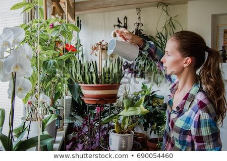 Gardener woman watering vegetables in the greenhouse Stock photo © Kzenon