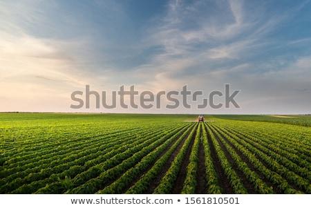 Szójabab növény mező tavasz mezőgazdaság zöld Stock fotó © simazoran