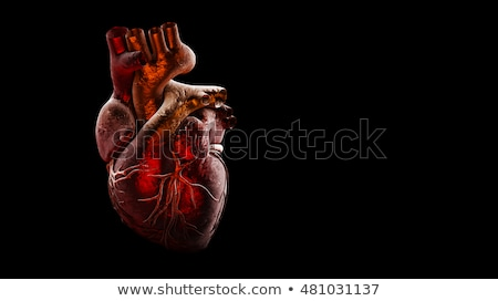 Humaine coeur anatomie saine corps isolé Photo stock © Lightsource