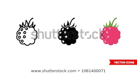 Icon Of Raspberry Stock photo © angelp