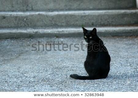 Gato preto escada sol enorme windows topo Foto stock © jsnover