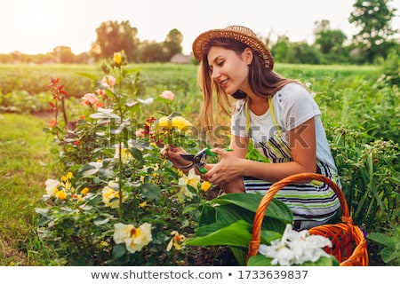 gardeners farming people with bushes of roses stock photo © robuart
