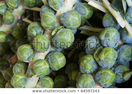 brussel sprout stalk macro Stock photo © pancaketom