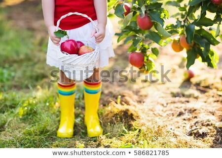 Gelukkig weinig vruchten mand glimlach Stockfoto © Lopolo