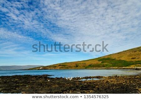 пляж · впечатление · после · полудня · солнце - Сток-фото © CarmenSteiner