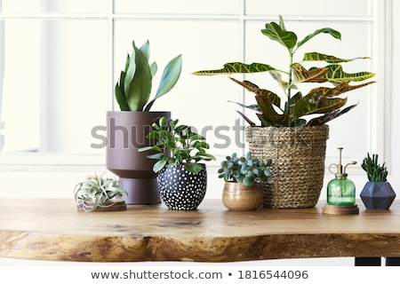 Green plant in flower pot Stock photo © odina222