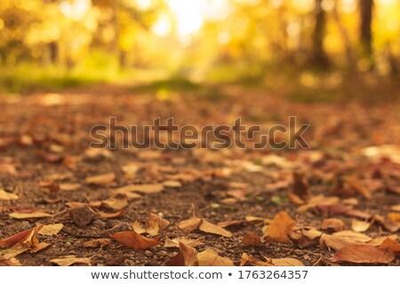 Country path Stock photo © t3mujin