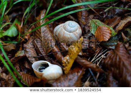 snail on yellow autumn grass stock photo © massonforstock