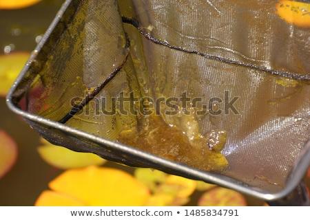 pond algae Stock photo © FOKA
