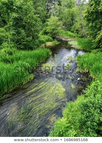 small river stock photo © basel101658