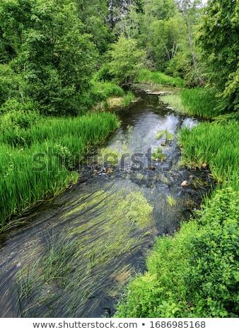 kicsi · folyó · zöld · erdő · tavasz · tájkép - stock fotó © basel101658