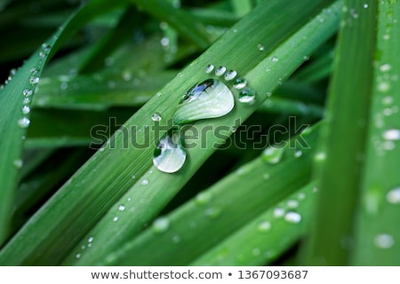 carbon footprint stock photo © lightsource