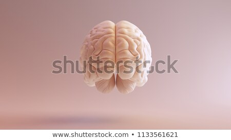 Human brain function Stock photo © Lightsource