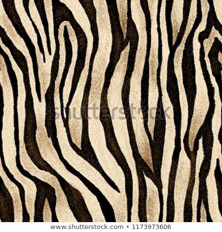Zebra bőr minta csík csempék divat Stock fotó © ArenaCreative