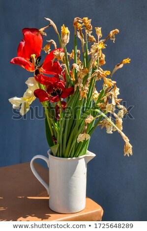 daffodil in vase on red chair in kitchen stock photo © meinzahn