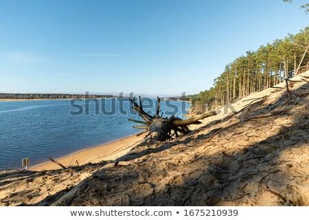 Pinho mar báltico primavera fundo beleza oceano Foto stock © fotoaloja