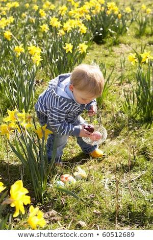 Erkek easter egg hunt nergis alan çocuk bahçe Stok fotoğraf © monkey_business