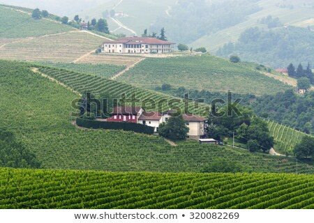 Rural road on the hills in Piedmont, Italy. Stock photo © rglinsky77
