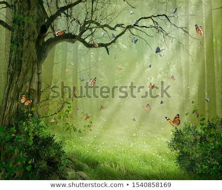 erdő · ősi · fa · fény · béke · álom - stock fotó © michaleyal