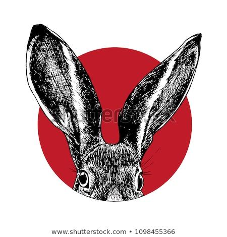 wild rabbit with big ears Stock photo © meinzahn