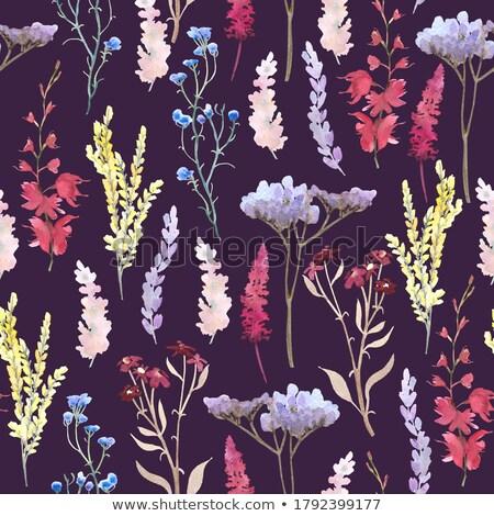 明るい カラフル 花束 庭園 自然 ストックフォト © alinbrotea