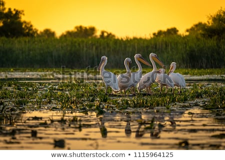 Danúbio delta belo pôr do sol paisagem reserva Foto stock © igabriela