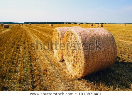 Beautiful landscape with straw bales in harvested fields Stock photo © artush