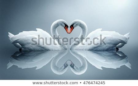 Kuğu sevmek dekoratif resimli kâğıt kesmek Stok fotoğraf © Soleil
