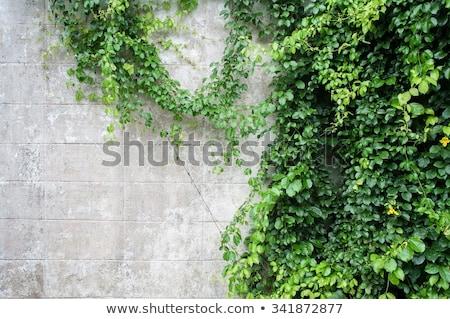 Verde planta parede decorado jardim estoque Foto stock © punsayaporn