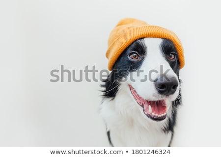 собака портрет красивой коричневая собака древесины палуба Сток-фото © AlphaBaby