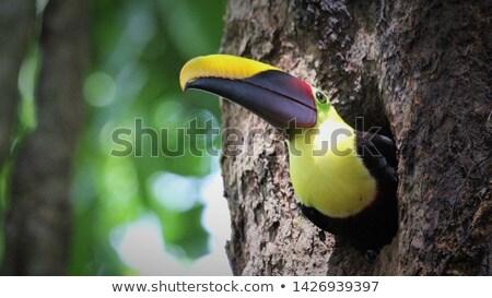 巣 ツリー 実例 自然 背景 芸術 ストックフォト © bluering
