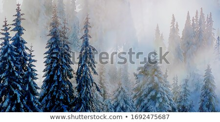 snow and hoarfrost covered trees in the frosty morning stock photo © capturelight