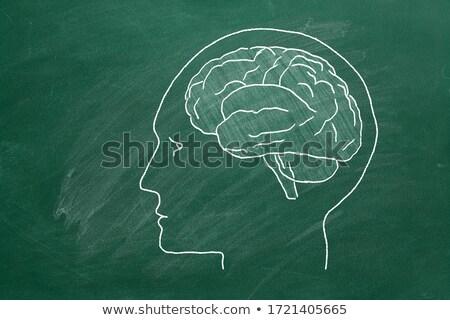 Verde lavagna imparare psicologia doodle Foto d'archivio © tashatuvango