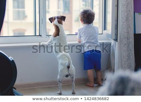 baby · jongen · pluche · hond · witte · speelgoed - stockfoto © cynoclub
