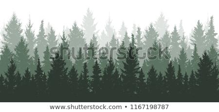 Verde ataviar forestales silueta invierno paisaje Foto stock © Sonya_illustrations