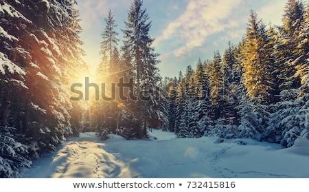 kar · kapalı · ağaçlar · gün · batımı · dumanlı · dağlar - stok fotoğraf © kotenko