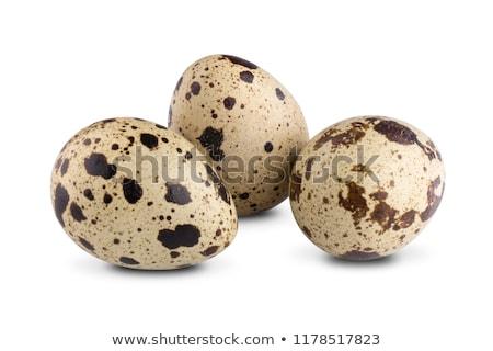 Set of Quail Eggs Stock photo © kostins