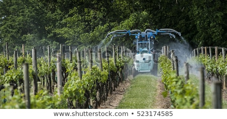 Agricultural chemical treatments in spring vineyard france Stock photo © FreeProd