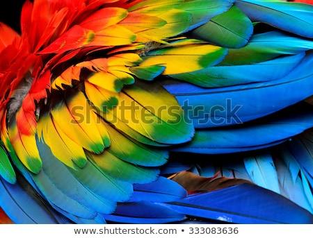 Veren papegaai textuur veer huisdier Stockfoto © IS2