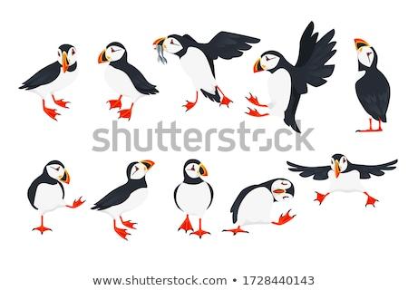Colorato uccello illustrazione adorabile piccolo natura Foto d'archivio © lenm