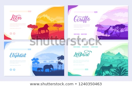 brochures with african animals in natural habitat set of flyers with wildlife in the sunset of the stock photo © linetale