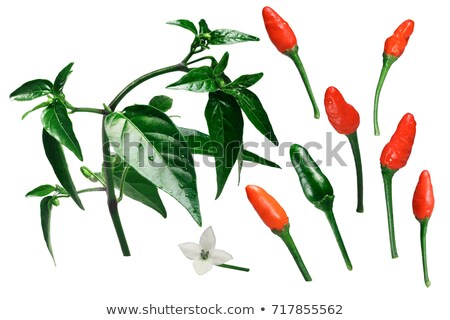 Pequin piquin chile pepper elements, paths Stock photo © maxsol7