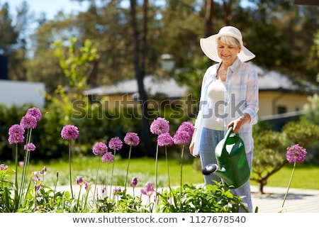 senior woman watering allium flowers at garden stock photo © dolgachov