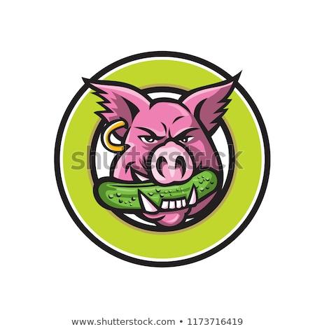 Wild Boar Biting Gherkin Circle Mascot Stock photo © patrimonio