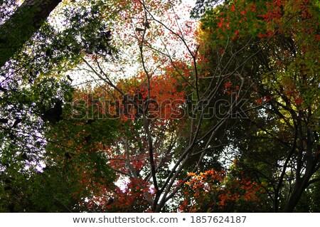 Bos laat najaar landelijk weg boom Stockfoto © taviphoto