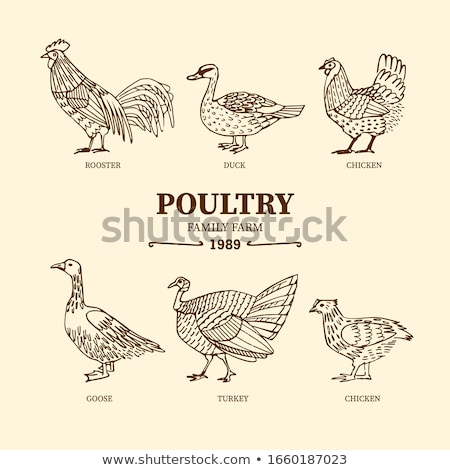Stock photo: vector set of duck