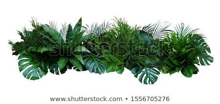 Zomer tropische planten vogels patroon zomervakantie Stockfoto © Margolana